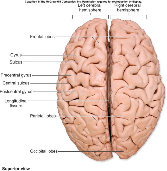 Human-brain-capacity